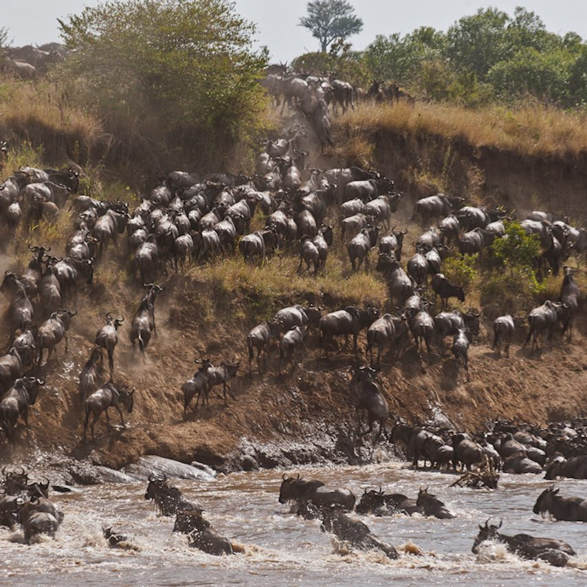 WHAT DO WILDEBEEST & ONE HORIZON TRAVELLERS SHARE IN COMMON?