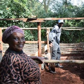 Pig Pen - a gift to help a struggling Kenyan grandma start her own small pig farm