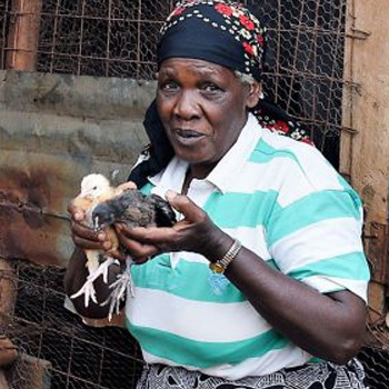 Chickens To Start Farms - a gift that breaks a Kenyan family's generational cycle of disadvantage