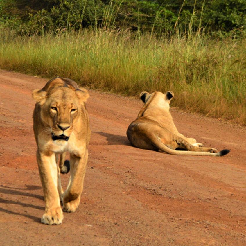 A Fantastic Wildlife & Community Experience in Nairobi