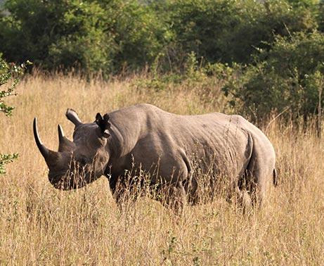 Early morning game drive-Sheldrick Wildlife Trust elephant orphanage-Ololo farm tour