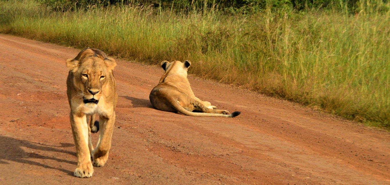Ololo Wildlife and Community <span>5 Days Tour</span>